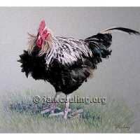 Black and White Cockerel (Print)