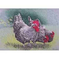 Cockerel and Hens (Print)