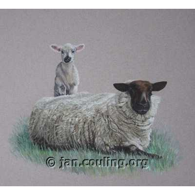 Suffolk Ewe and Lamb (Print)